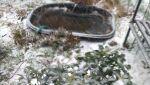 zima 2021-04-05 at 16.48.15.jpeg