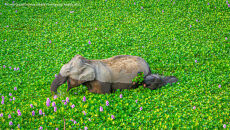 Kunal Gupta/Comedy Wildlife Photo Awards 2020