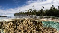 """""""Koniec raju na Wyspach Salomona"""""""