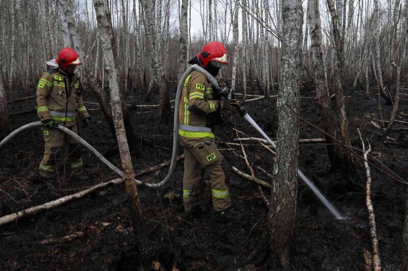 Strażacy podczas pracy przy dogaszaniu pożaru w Biebrzańskim Parku Narodowym w pobliżu wsi Wroceń, 25 kwietnia 2020 (PAP/Artur Reszko)